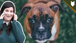 ARE BOXER GOOD FOR FIRST TIME OWNERS