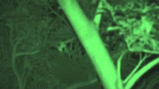 沖繩狐蝠 Okinawa Fruit Bat オキナワオオコウモリ.wmv