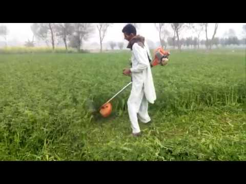 al barkat dairy farm punjab pakistan.