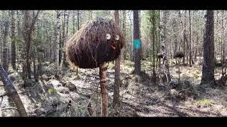Молодая девушка в лесу отсосав член спутника трахается стоя в лёгком наклоне