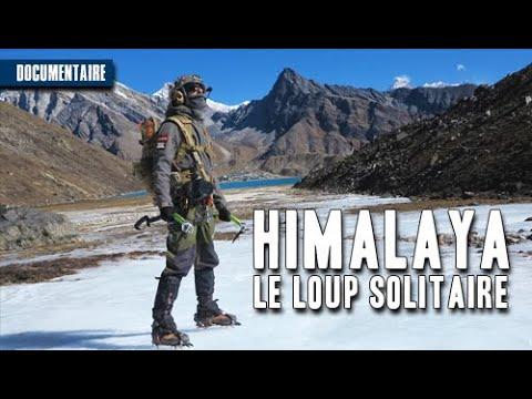 ???????????? Himalaya - Le loup solitaire (Documentaire Auteur photographe spécialiste de l'Himalaya)