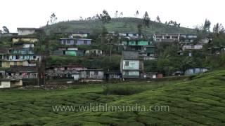 Munnar hills carpeted with verdant tea plantations