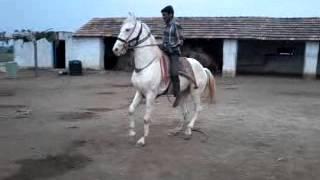Horse Soni stud farm(2)