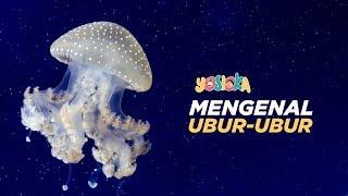 Download Mengenal Ubur-ubur | Beberapa fakta mengenai ubur-ubur Mp3