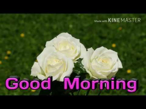 Good morning 2017 flowers whattsapp video good morning 2017 flowers whattsapp video mightylinksfo