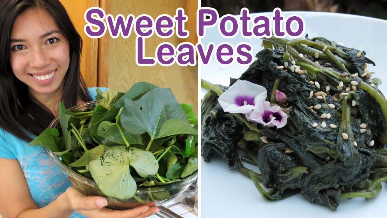 Harvesting Cooking Sweet Potato Leaves Youtube
