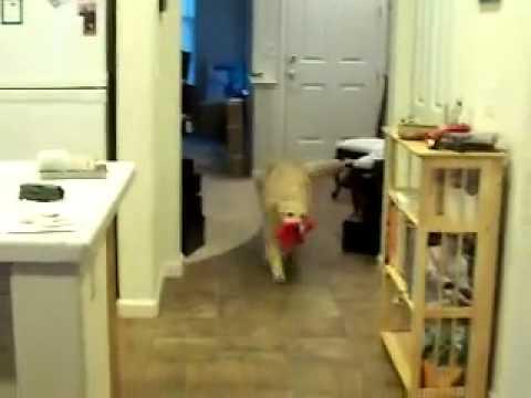 Perro ayuda a limpiar la casa youtube - Limpiar la casa ...