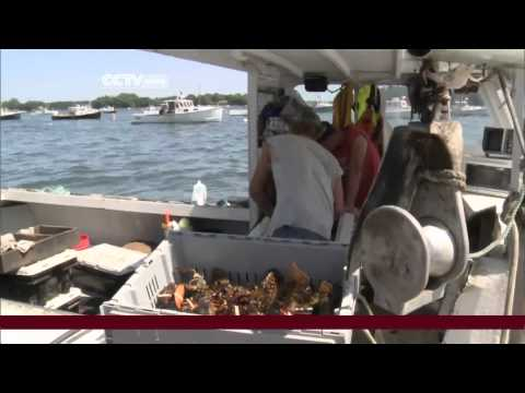 Maine Lobster Prices Fall Sinking the State's Economy