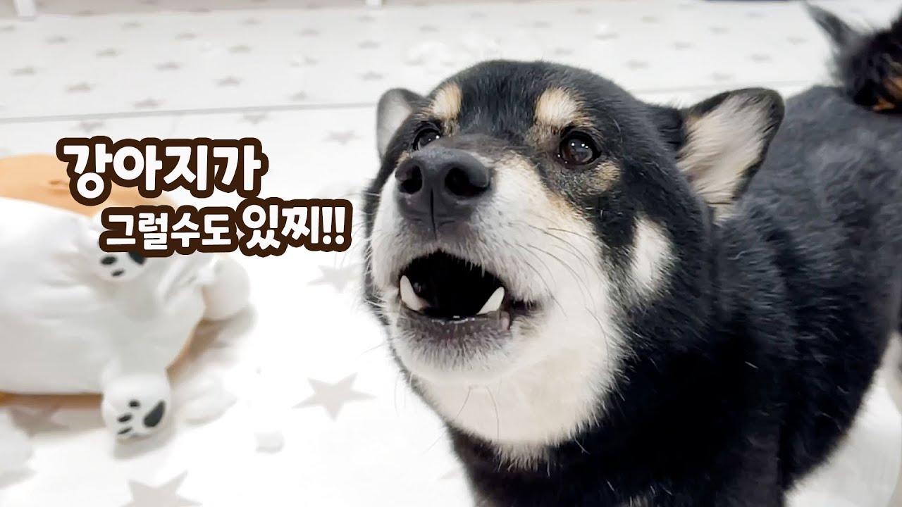 사고쳐서 혼냈더니 주인에게 말대꾸하는 강아지