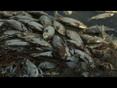 A million dead fish cause environmental stink in Australia
