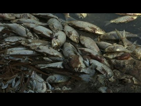 A Million Dead Fish Cause Environmental Stink In Australia