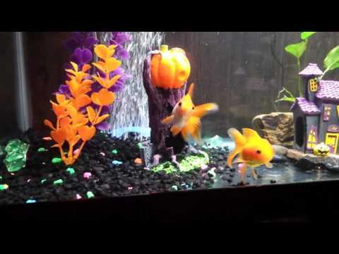 Petsmart Goldfish - Tips On Picking Healthy Fish