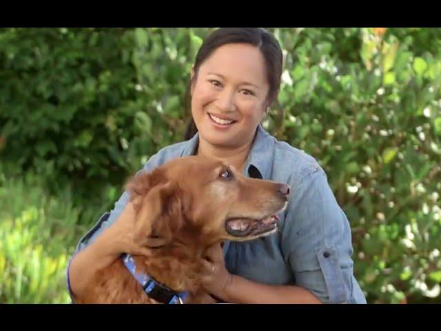 Dog Grooming & Dog Care (Petco)