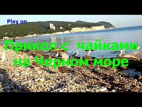 Отель black Sea Геленджик Черное Море. т. 8 (86141) 32 322