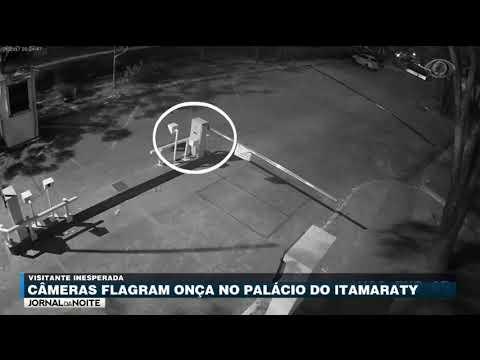 Câmeras Flagram Onça No Palácio Do Itamaraty