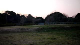 近所のドッグラン化してる空き地で走り回るサルーキとアイリッシュセタ...