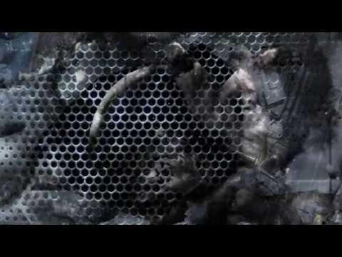 DRACULA LEWIS - CHEETAH