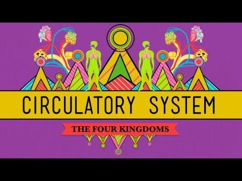Circulatory & Respiratory Systems -...