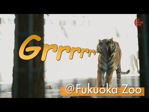 福岡市動物園に遊びにきたよ!