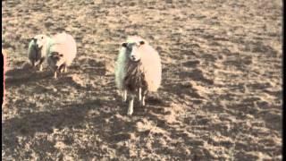 Júníus Meyvant - Neon Experience (Official Video)
