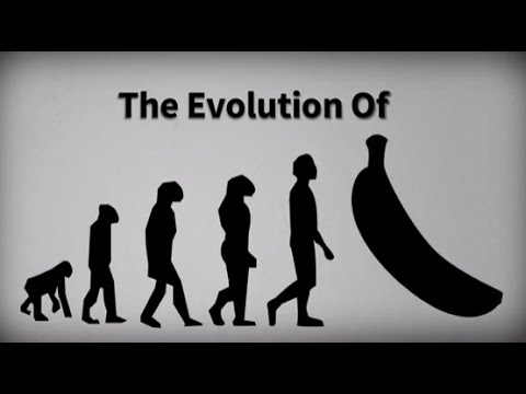 Evolution of the Banana | From a Fruit With Seeds to the Cavendish banana