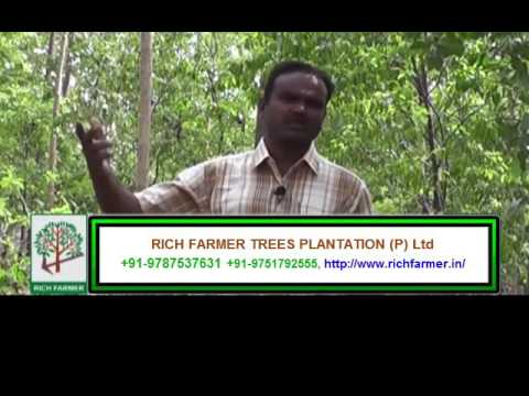Sandalwood Tree  Plantation – Part 1