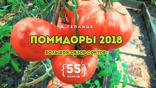 Обзор 55 сортов помидор в теплице! В 2018 году