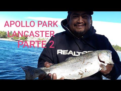 Seguimos En La Pesca De Truchas En El Lago Apollo Community Regional Park LANCASTER CA Fishing Trout