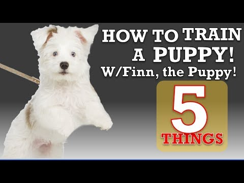 how-to-train-your-puppy-leash-walking-and-4-more-things!