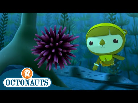 Octonauts - The Urchin Invasion | Cartoons for Kids | Underwater Sea Education