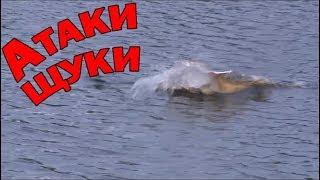 ЖЕСТОКИЕ АТАКИ ЩУКИ В ТРАВЕ. Рыбалка на озерах летом.Спиннинг 2019