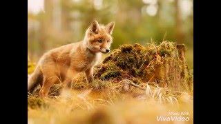 3 часть фильма. Животные леса крупные и малые друзья!!!