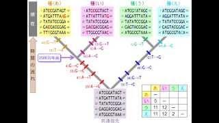 分子進化をヒントに系統樹をつくる(ゆうきのバイオロジー)