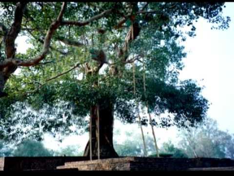 Ananda Bodhi Tree