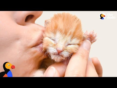 Tiniest Kitten Is The Biggest Fighter | The Dodo