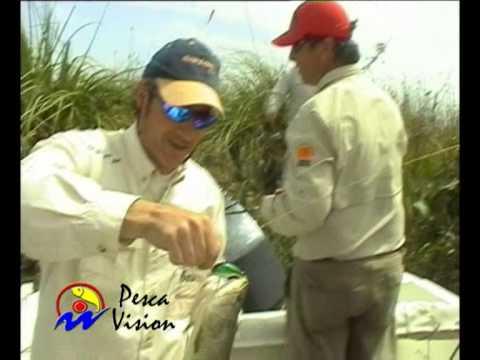 Tarariras con señuelos en el Delta