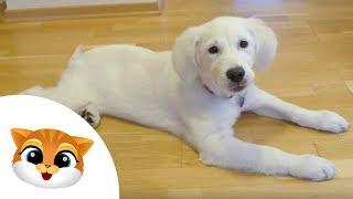 Jak nauczyć psa czystości? - Dziecko TV