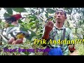 Trik Mikat Burung Kecil  Mp3 - Mp4 Download