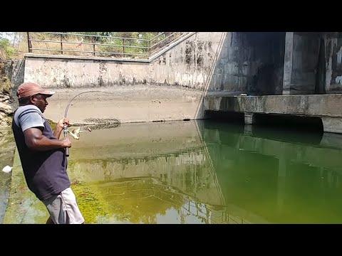 Fish hunting  Fishing For big catfish thumbnail