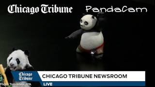 Chicago Tribune PandaCam