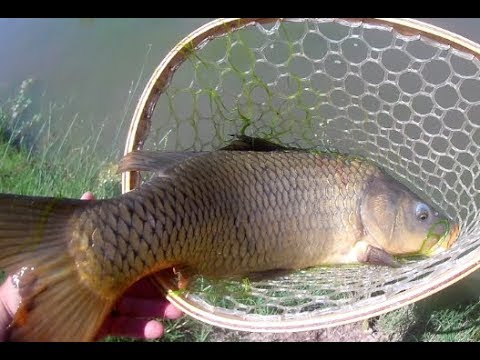 A Fun Little Day Of Fishing At The Corrales Riverside Drain