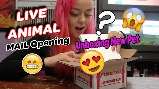 Unboxing New Pet | LIVE ANIMAL MAIL | Help me name him!