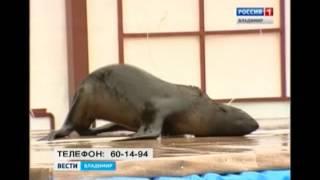 Шоу дельфинов в Суздале