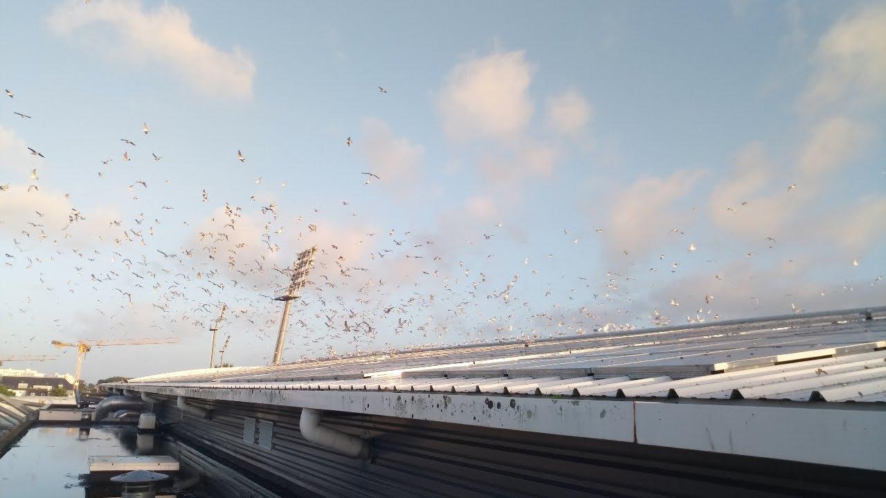 Nettoyage des fientes d'oiseaux sur les panneaux solaires avec le Solarcleano F1 en France