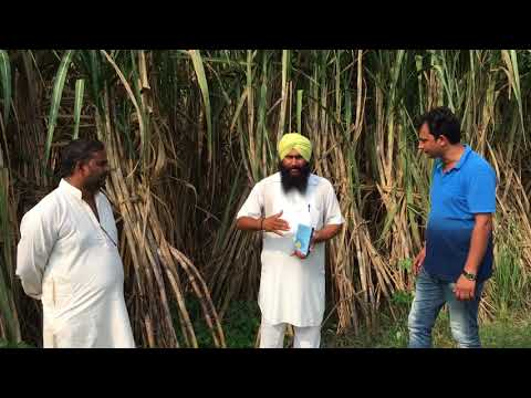 Gharda Chemicals Limited product POLICE success story in Sugarcane from District Lakhimpur