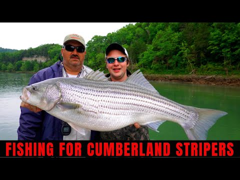 Cumberland River Striper Fishing