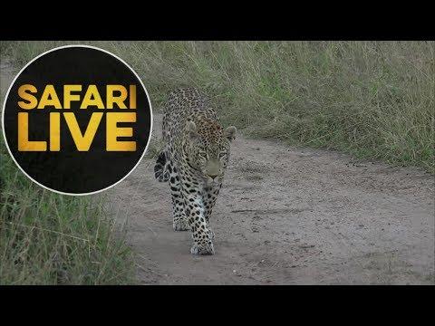 safariLIVE - Sunset Safari - May, 20. 2018