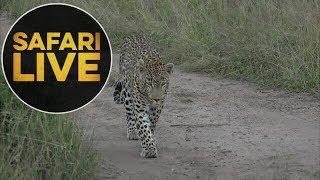 safariLIVE - Sunset Safari - May, 20. 2018 thumbnail