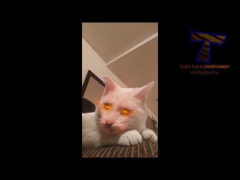Videos Devertidos De Gatos Y Perros En Snapchat XDXDXD