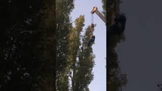 В Воронеже домашнего кота сняли с дерева с помощью крана